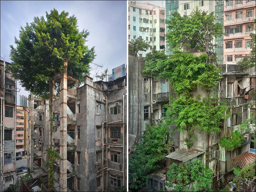 Природа побеждает цивилизацию