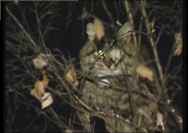 Самое эпичное спасение кота с дерева