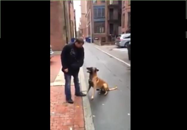 Идеально тренированная собака