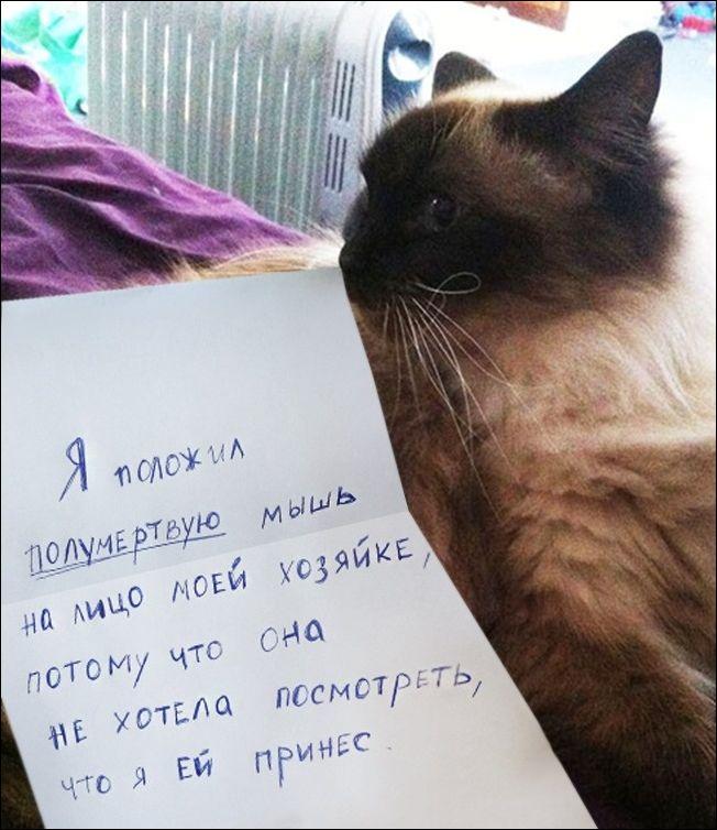 провинившийся кот