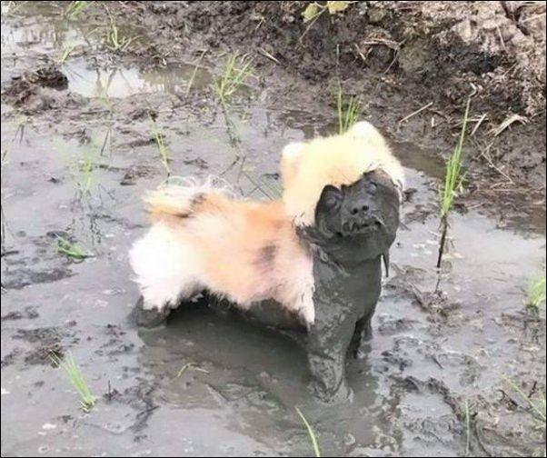 смешные животные