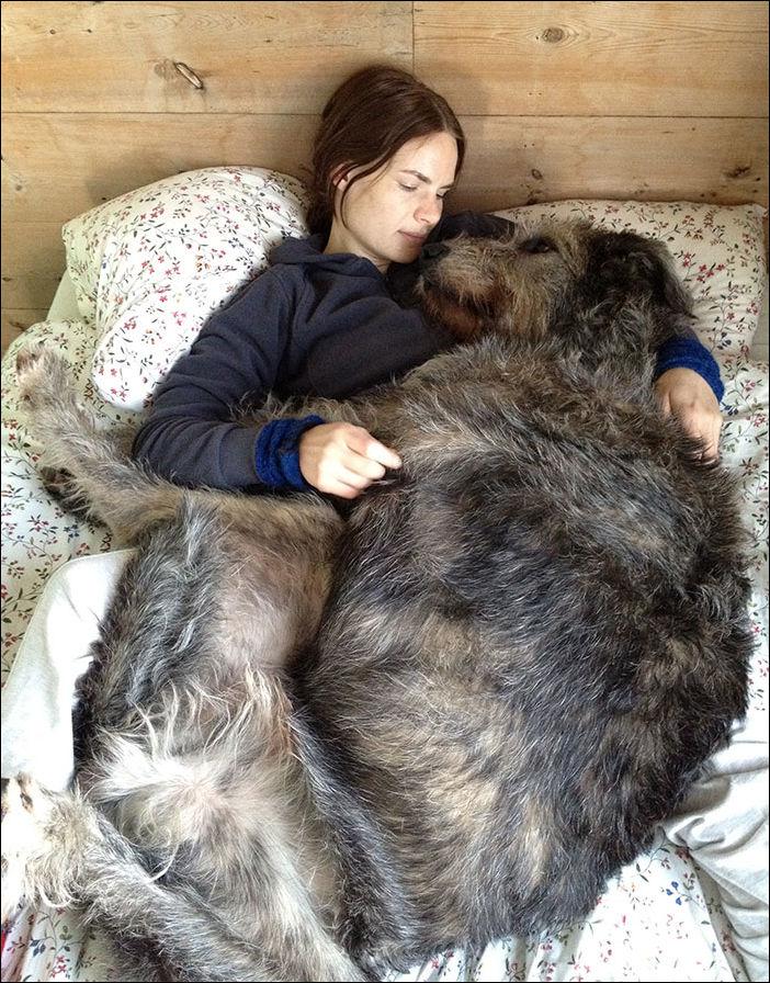 очень большие собаки
