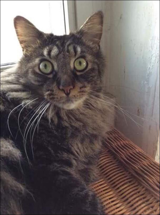 коты с необычным окрасом шерсти