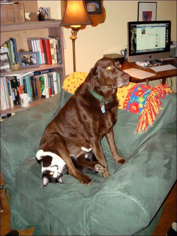 коты и собаки живущие вместе