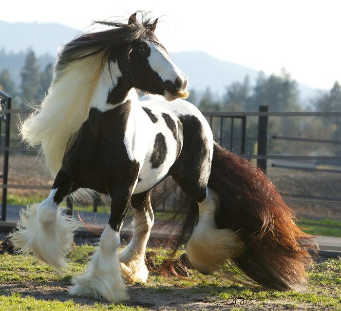 усы у лошади