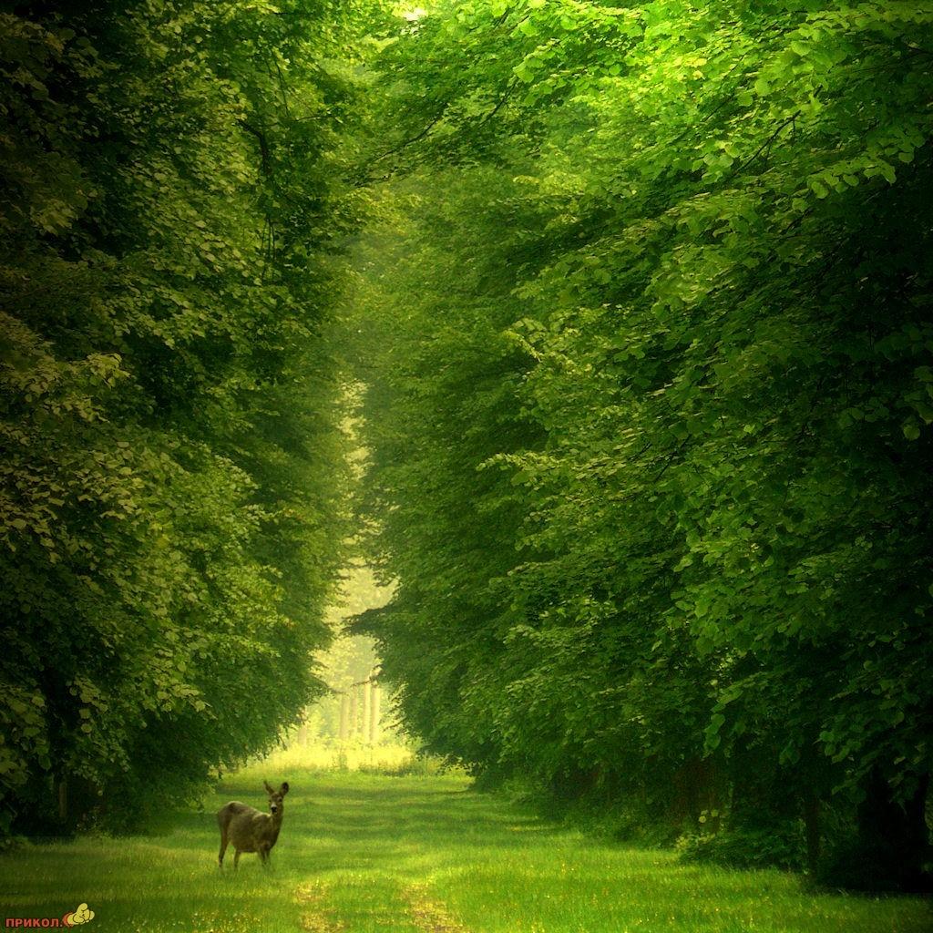 nature_06.jpg