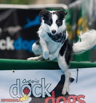 jumping_dog_2.jpg