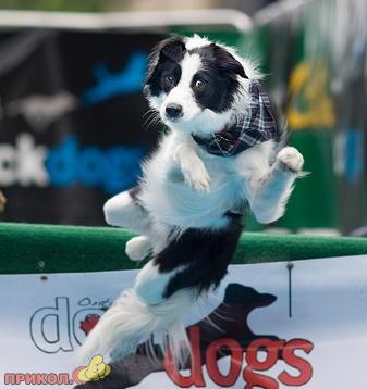 jumping_dog_3.jpg