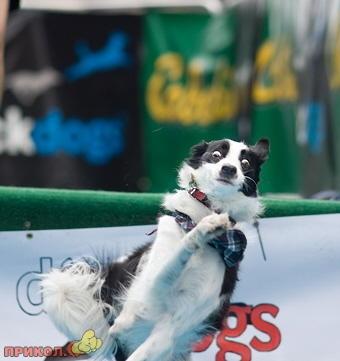 jumping_dog_4.jpg