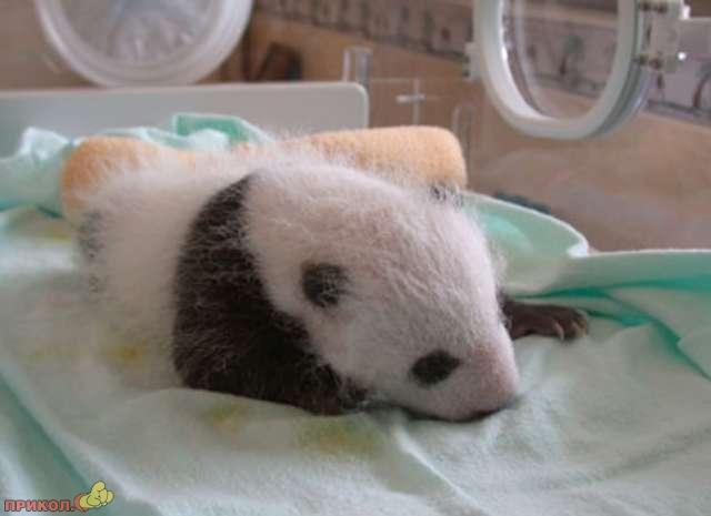 panda_09.jpg
