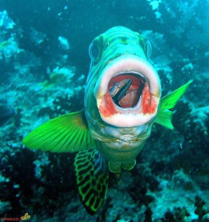 Картинки рыб приколы, открытка