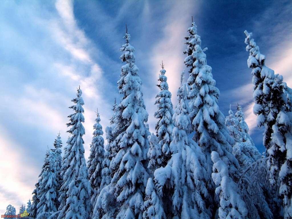 zima-12.jpg