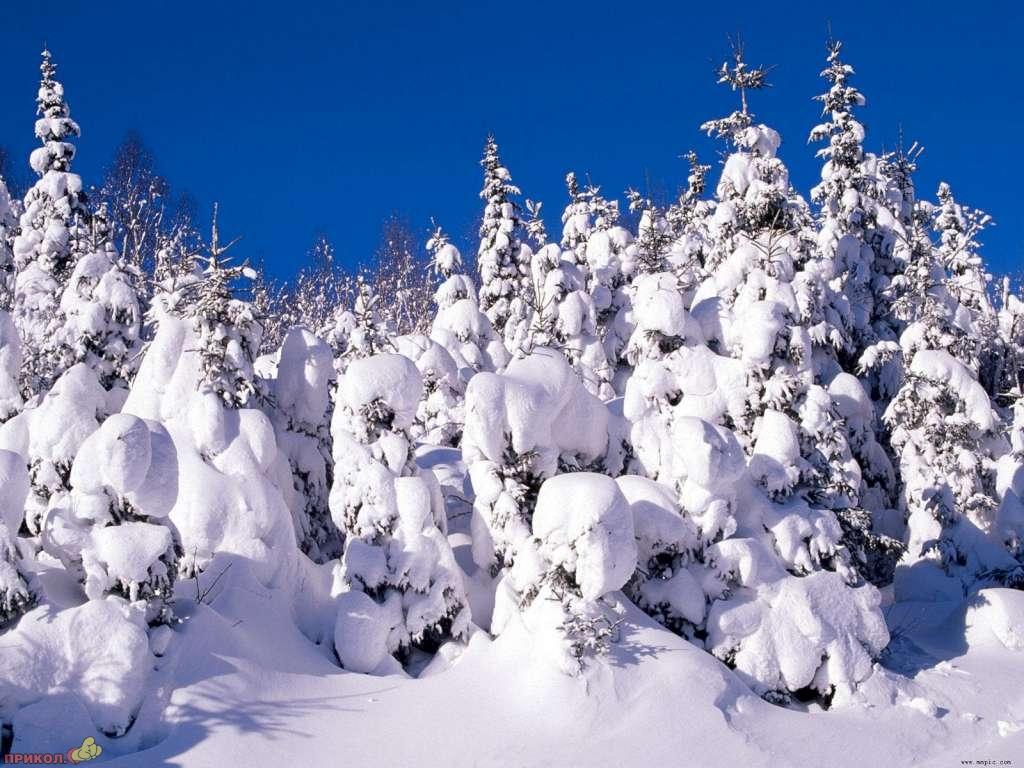 zima-14.jpg