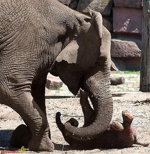 crazy-elephant-01.jpg