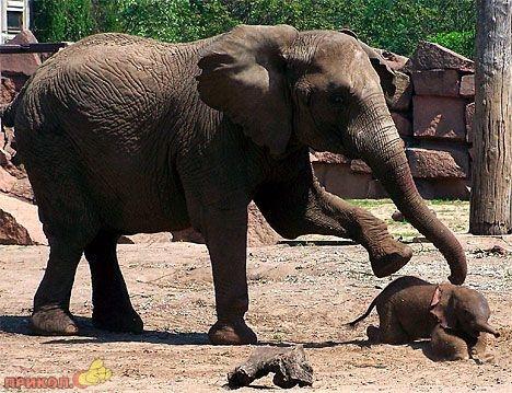 crazy-elephant-02.jpg