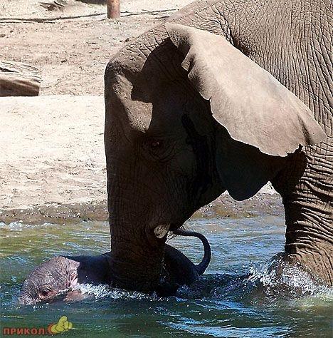crazy-elephant-03.jpg