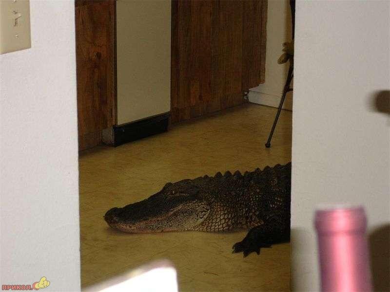 gator-02.jpg
