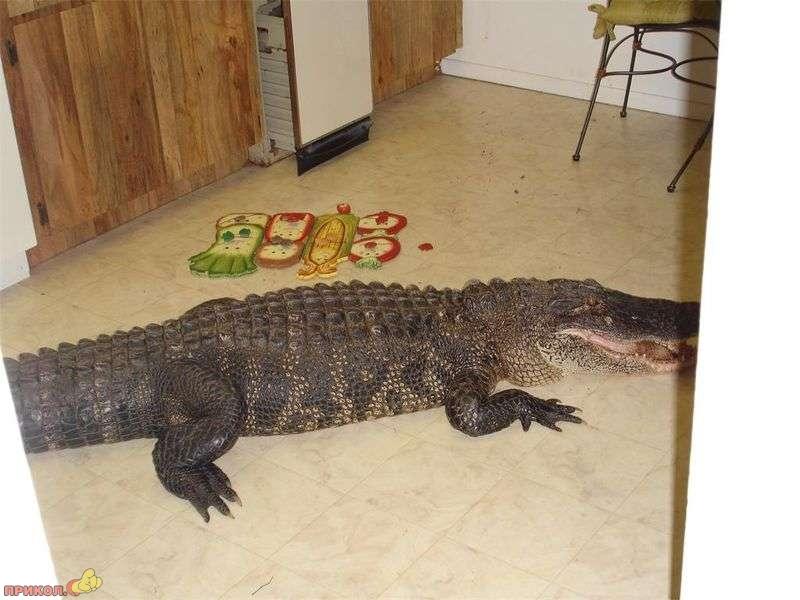 gator-04.jpg