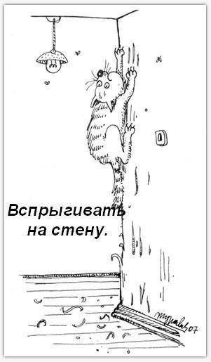 Кошачьи обязанности  в картинках)))