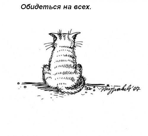 koshka-doma-14.jpg
