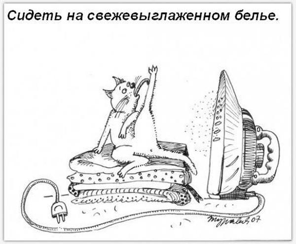 koshka-doma-15.jpg