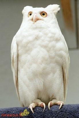 albinos-02.jpg