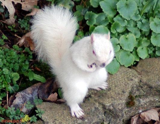 albinos-04.jpg