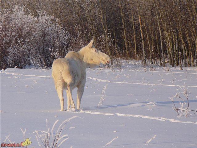 albinos-10.jpg