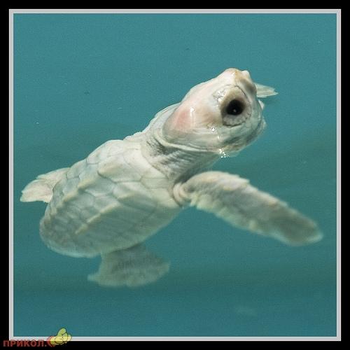 albinos-11.jpg