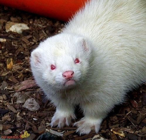 albinos-14.jpg