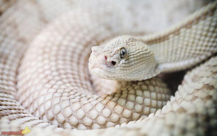 albinos-15.jpg
