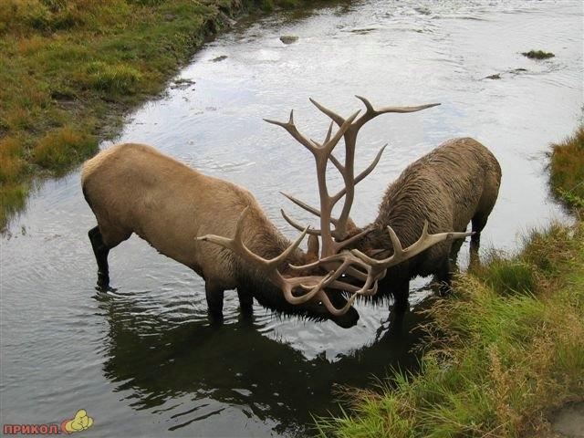 deers_01.jpg