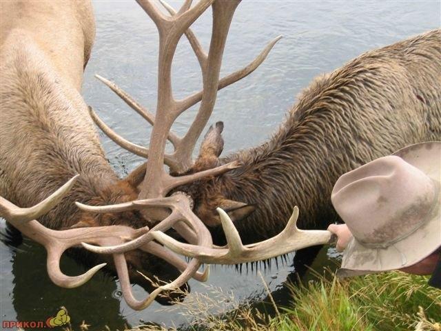 deers_02.jpg