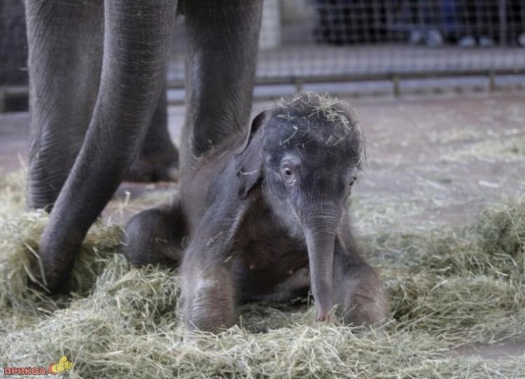 baby-elephant-01