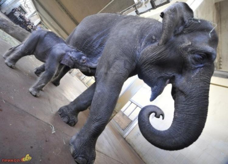 baby-elephant-05
