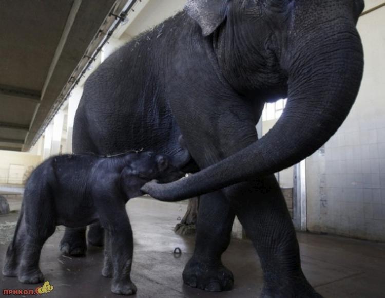 baby-elephant-06