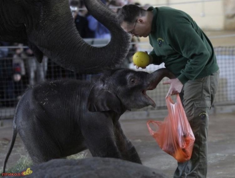 baby-elephant-07