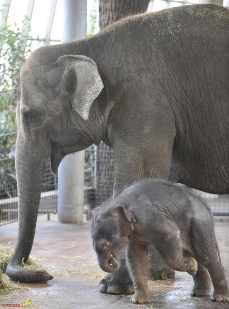 baby-elephant-09