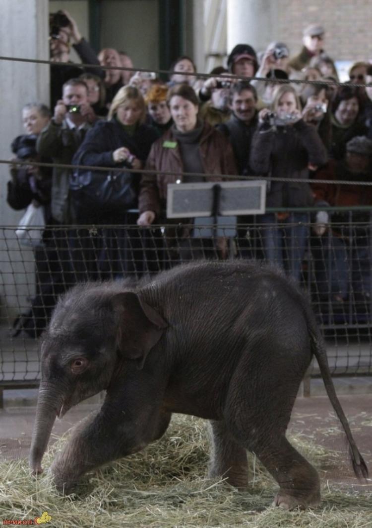 baby-elephant-12