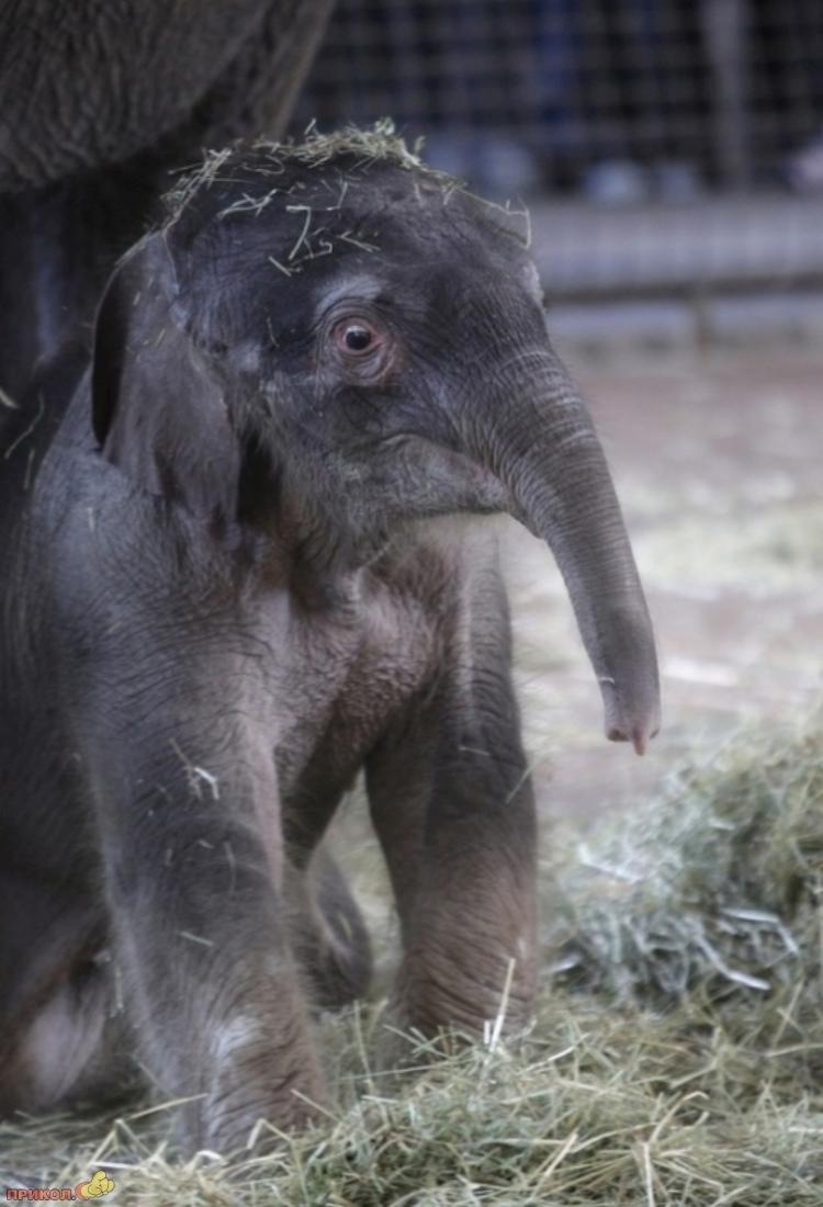baby-elephant-13
