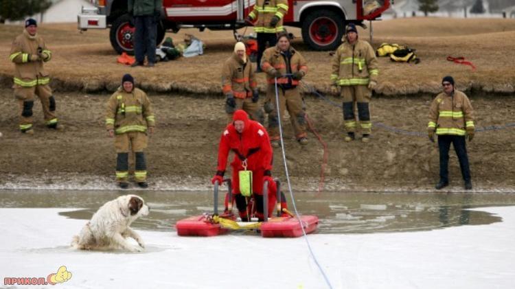 dog-rescue-120309-01