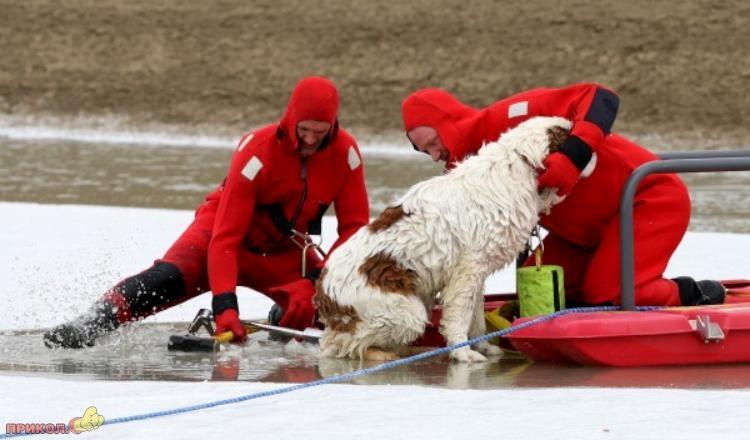 dog-rescue-120309-02