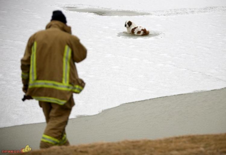 dog-rescue-120309-03