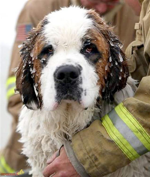 dog-rescue-120309-04