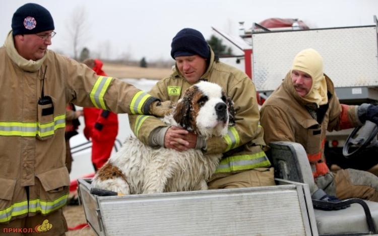 dog-rescue-120309-05