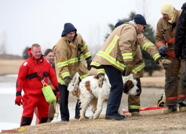 dog-rescue-120309-06