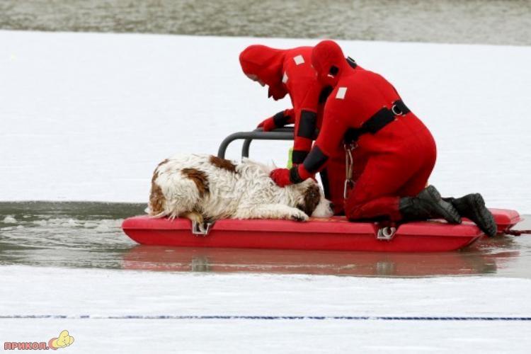dog-rescue-120309-07