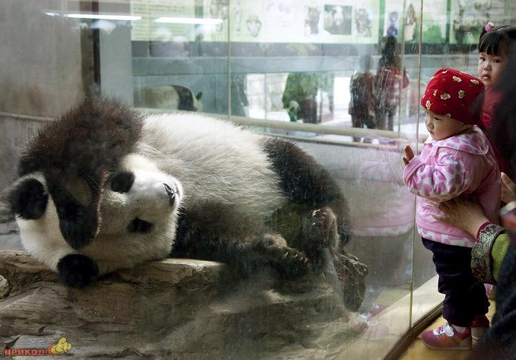 panda-goes-home-03