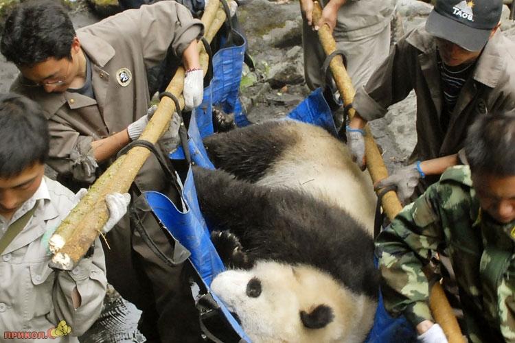 panda-goes-home-06