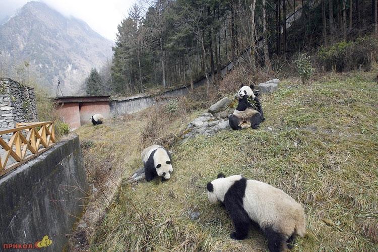 panda-goes-home-07